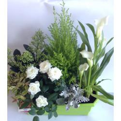 Jardinière blanche et verte