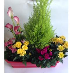 Jardinière jaune et rose